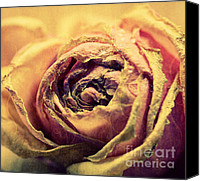 White Rose Canvas Prints - Old Love Canvas Print by Kristin Kreet