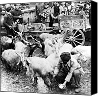 Crowd Scene Canvas Prints - Old Palermo Sicily - Goats being milked at a market Canvas Print by International  Images