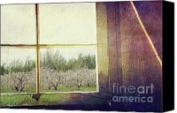 Creativity Canvas Prints - Old window looking out to apple orchard Canvas Print by Sandra Cunningham