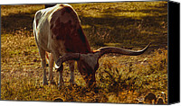 Barbecue Canvas Prints - Older Texas Long Horn  Canvas Print by Kelly Rader