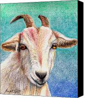 Goat Drawings Canvas Prints - Olivia the Goat Canvas Print by Scarlett Royal