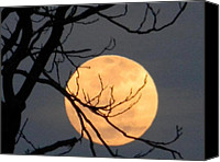 Trees Special Promotions - Ominous Full Moon Canvas Print by Eric Barich