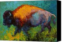 Bison Canvas Prints - On The Run - Bison Canvas Print by Marion Rose