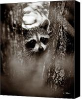Critter Canvas Prints - On Watch - Sepia Canvas Print by Christopher Holmes