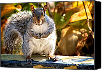 Fun Canvas Prints - One Gray Squirrel Canvas Print by Bob Orsillo