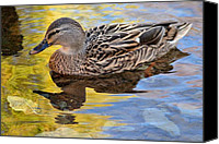 Fantasy Photo Canvas Prints - One Leaf Two Ducks Canvas Print by Robert Harmon