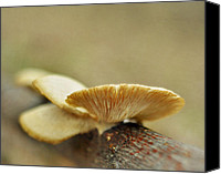 Mushroom Canvas Prints - Only Love Hath No Decay Canvas Print by Rebecca Sherman