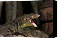 Lizard Canvas Prints - Open Wide Canvas Print by Mike  Dawson
