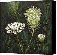 Flora Pastels Canvas Prints - Opening Lace Canvas Print by Lisa Kretchman