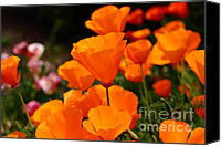 Orange Flower Photo Canvas Prints - Orange California Poppy . 7D14755 Canvas Print by Wingsdomain Art and Photography
