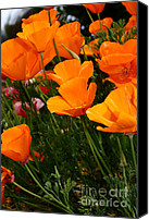 Orange Flower Photo Canvas Prints - Orange California Poppy . 7D14756 Canvas Print by Wingsdomain Art and Photography