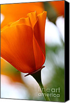Orange Flower Photo Canvas Prints - Orange California Poppy . 7D14789 Canvas Print by Wingsdomain Art and Photography