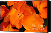 Orange Flower Photo Canvas Prints - Orange California Poppy . 7D14794 Canvas Print by Wingsdomain Art and Photography