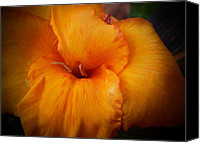 Canna Canvas Prints - Orange Canna Flower Canvas Print by D J Larsen