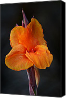 Canna Canvas Prints - Orange Canna Lily Canvas Print by Melanie Moraga