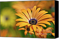 Flower Canvas Prints - Orange Crush Canvas Print by Charles Dobbs