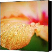 Orange Flower Photo Canvas Prints - Orange Drops Canvas Print by Andre Bernardo