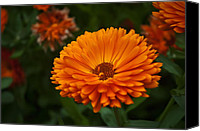 Noah Canvas Prints - Orange Flower at the Manor Canvas Print by Noah Katz