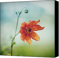 Orange Flower Photo Canvas Prints - Orange Flower Canvas Print by Julia Davila-Lampe