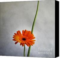 Nostalgic Digital Art Canvas Prints - Orange gernera Canvas Print by Bernard Jaubert