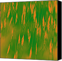 Modified Canvas Prints - Orange Grass Spikes Canvas Print by Heiko Koehrer-Wagner