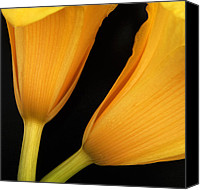 Featured Photo Canvas Prints - Orange Lily Abstract Canvas Print by Tony Ramos