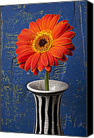 Chrysanthemums  Canvas Prints - Orange Mum Canvas Print by Garry Gay