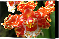 Cambria Photo Canvas Prints - Orange Orchid Canvas Print by Laurel Talabere