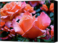 Rose Photo Canvas Prints - Orange-Pink Roses  Canvas Print by Rona Black
