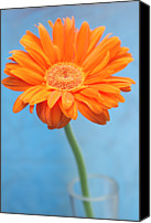 Windsor Canvas Prints - Orange Slanted Gerbera Canvas Print by Photography by Gordana Adamovic Mladenovic