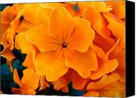 Flowers Canvas Prints - Orange Spring Canvas Print by Roberto Alamino