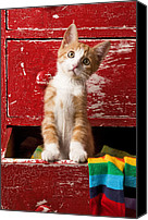 Old Face Canvas Prints - Orange tabby kitten in red drawer  Canvas Print by Garry Gay