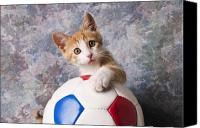 Household Canvas Prints - Orange tabby kitten with soccer ball Canvas Print by Garry Gay