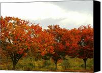 View Askew Canvas Prints - Orange Trees At Minto Brown Canvas Print by Katherine Adams