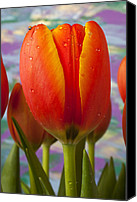 Purples Canvas Prints - Orange Tulip Close Up Canvas Print by Garry Gay