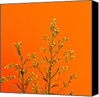 Nature Canvas Prints - Orange Wall Canvas Print by Julie Gebhardt