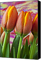 Purples Canvas Prints - Orange Yellow Tulips Canvas Print by Garry Gay