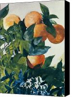 Watercolor On Paper Canvas Prints - Oranges on a Branch Canvas Print by Winslow Homer