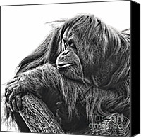Orangutan Photo Canvas Prints - Orangutan Canvas Print by Lana Trussell