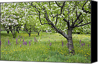 Orchidaceae Canvas Prints - Orchard With Flowering Orchids Canvas Print by Konrad Wothe