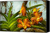 Cattleya Canvas Prints - Orchid - Oncidium - Ripened   Canvas Print by Mike Savad