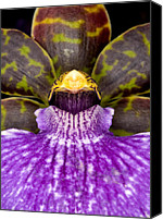 Orchidaceae Canvas Prints - Orchid 37 Canvas Print by Terry Elniski