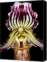 Orchidaceae Canvas Prints - Orchid 39 Canvas Print by Terry Elniski
