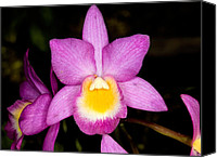 Orchidaceae Canvas Prints - Orchid 40 Canvas Print by Terry Elniski