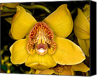 Orchidaceae Canvas Prints - Orchid 42 Canvas Print by Terry Elniski