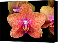 Orchidaceae Canvas Prints - Orchid 43 Canvas Print by Terry Elniski