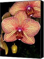Orchidaceae Canvas Prints - Orchid 45 Canvas Print by Terry Elniski