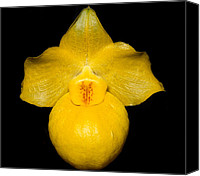 Orchidaceae Canvas Prints - Orchid 48 Canvas Print by Terry Elniski
