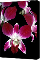Orchidaceae Canvas Prints - Orchid 49 Canvas Print by Terry Elniski
