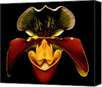 Orchidaceae Canvas Prints - Orchid 51 Canvas Print by Terry Elniski